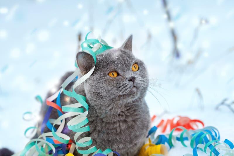 Gato enredado en flámula colorida imágenes de archivo libres de regalías