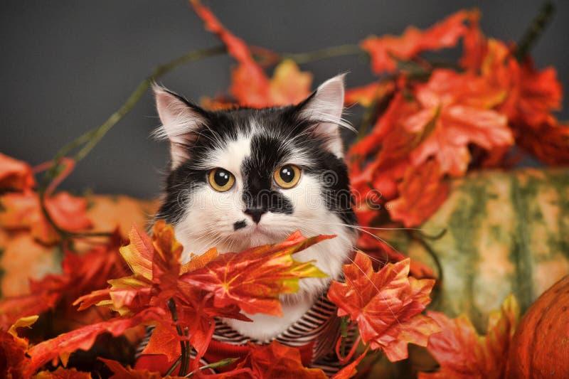 Gato entre las hojas de otoño fotografía de archivo