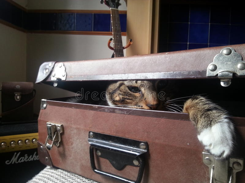 Gato escondendo imagens de stock