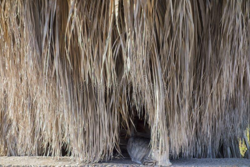 Gato escondido atrás imagem de stock