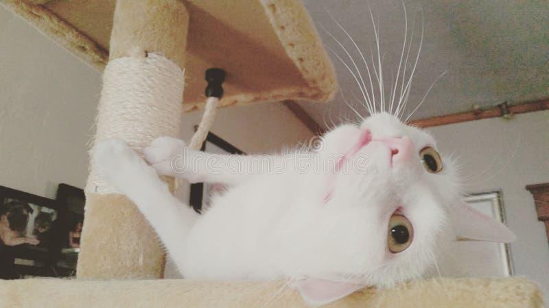 Gato estranho imagem de stock