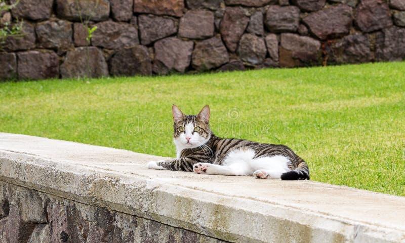 Gato estranho da raça fotos de stock