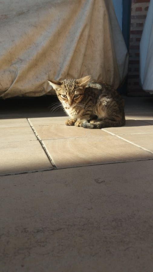 Gato estranho do bebê fotografia de stock