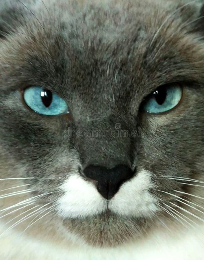 Gato estupendo imagenes de archivo