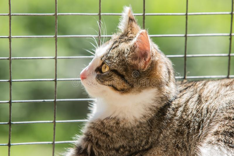 Gato europeu no abrigo animal imagens de stock royalty free