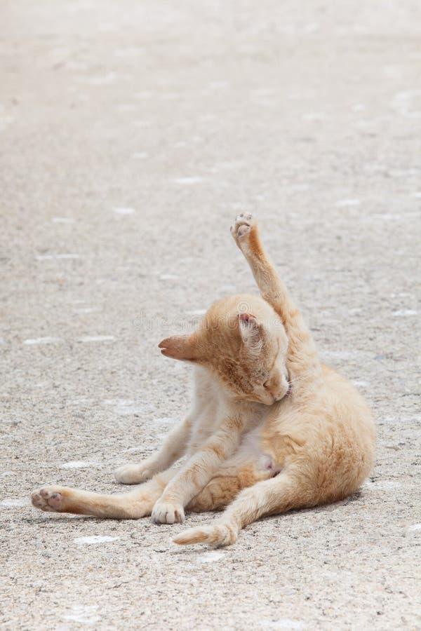 Gato feliz que hace la contorsión en el piso foto de archivo
