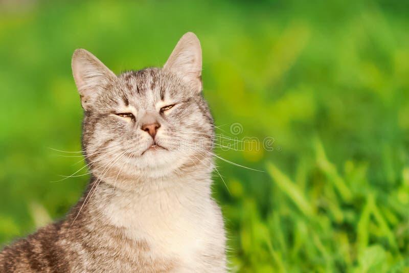 Gato feliz que senta-se na grama e que sorri no sol do verão imagem de stock