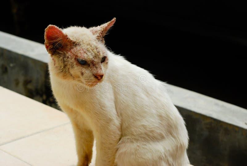 Gato feo con enfermedad de piel fotos de archivo libres de regalías