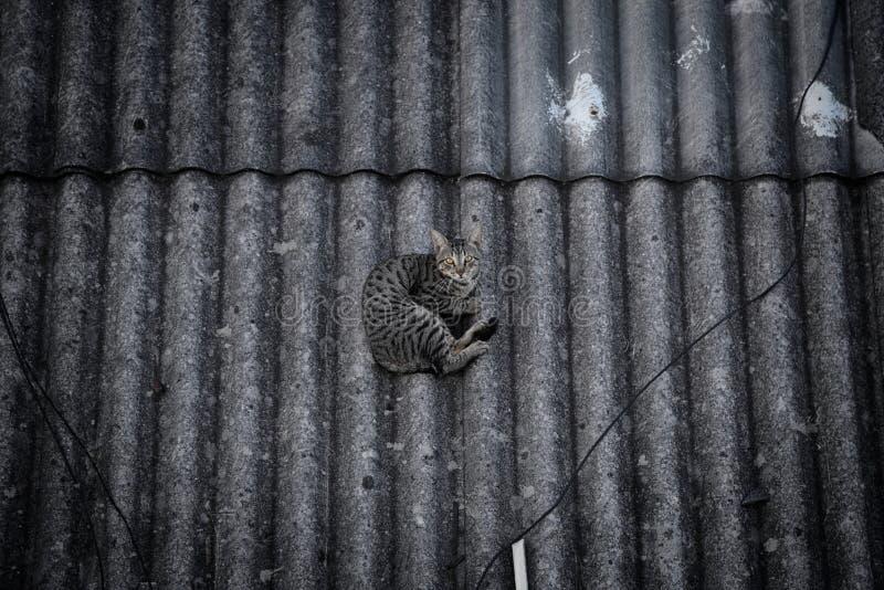 Gato feroz que encontra-se em um telhado imagens de stock royalty free
