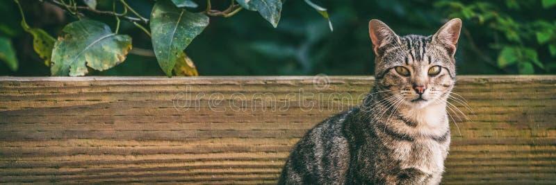 Gato fuera de - fondo panorámico de los gatos del animal doméstico o de la calle de la casa fotos de archivo