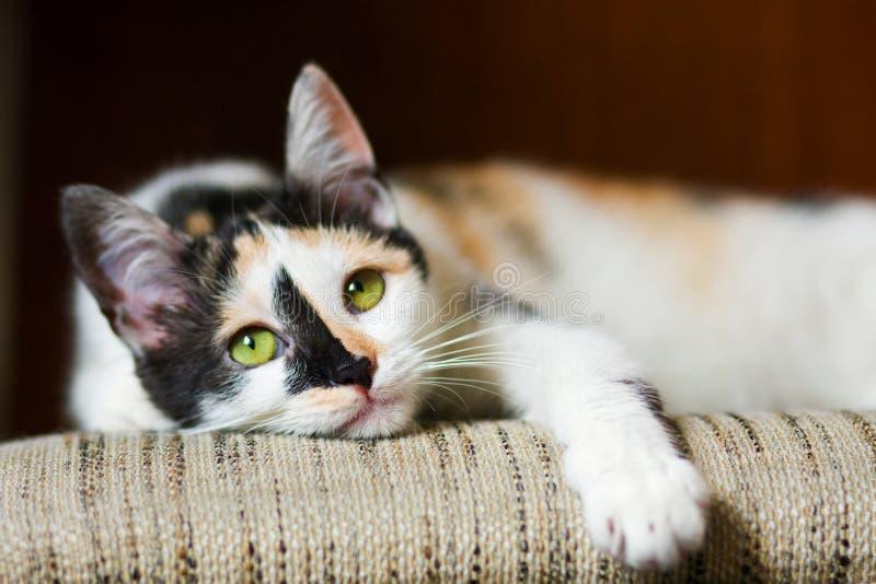 Gato furado foto de stock royalty free