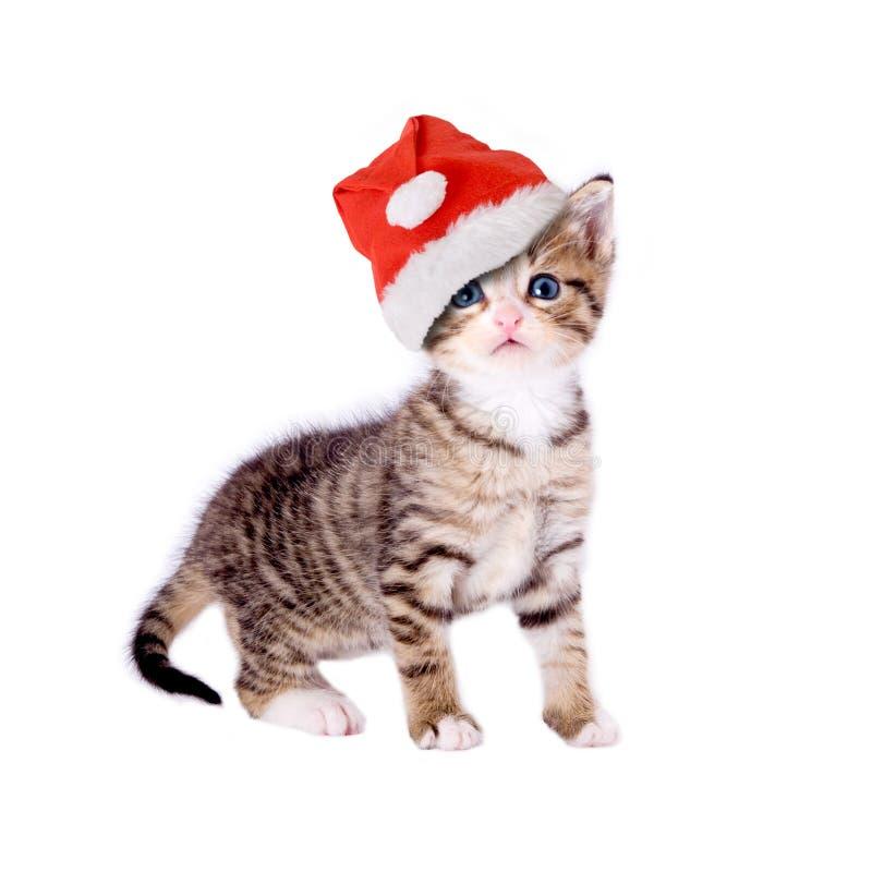 Gato/gatito con el sombrero de la Navidad fotos de archivo