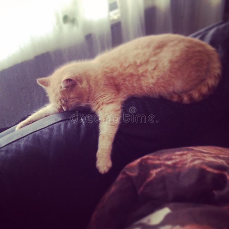 Gato gordo foto de stock
