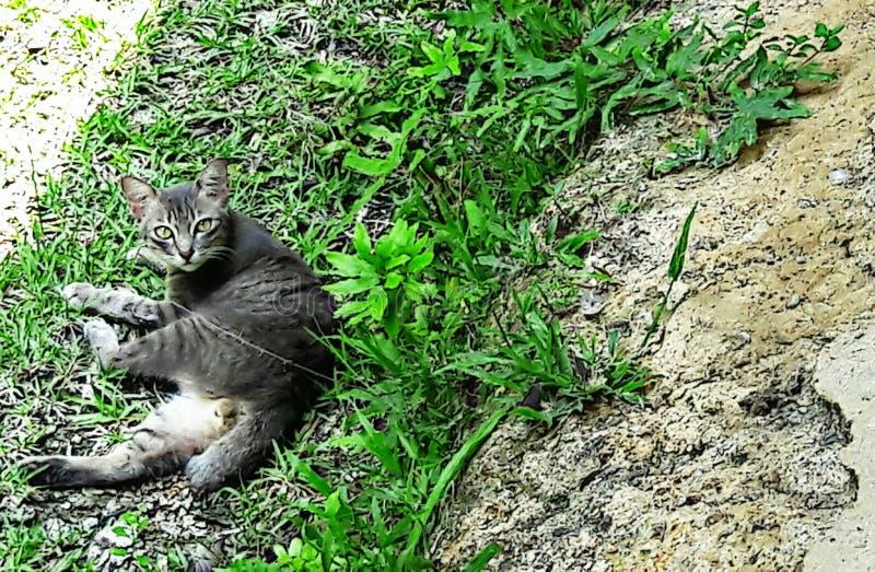 Gato gordo de descanso imagem de stock royalty free