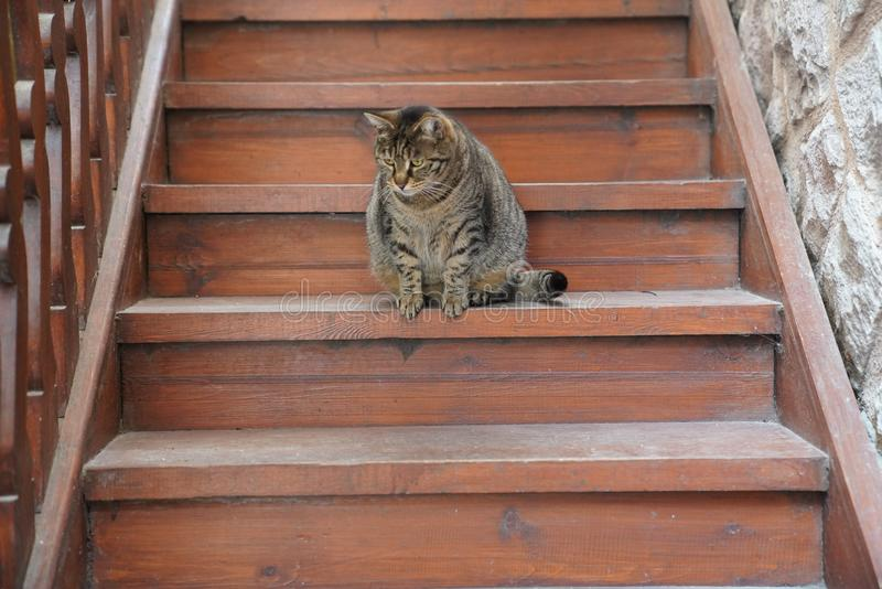 Gato gordo marrom bonito que senta-se na escadaria de madeira imagens de stock royalty free