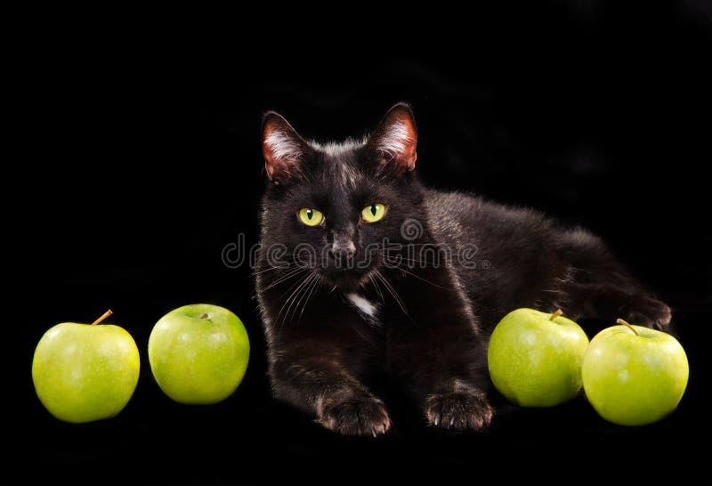 Gato Green-eyed Preto Entre Maçãs Verdes Fotos de Stock Royalty Free