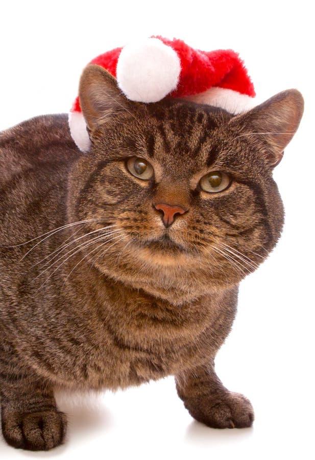 Gato gris con el sombrero rojo de Santa Claus. fotos de archivo