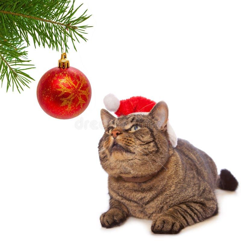 Gato gris con el sombrero rojo de Santa Claus. imagenes de archivo