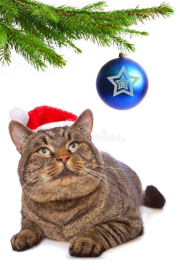 Gato gris con el sombrero rojo de Santa Claus. fotografía de archivo