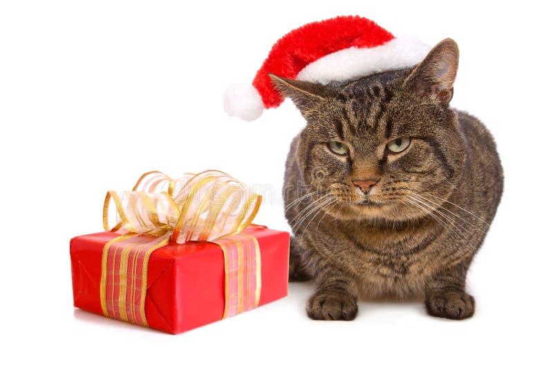 Gato gris con el sombrero rojo de Santa Claus. foto de archivo