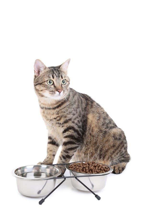 Gato gris con los cuencos de comida fotos de archivo