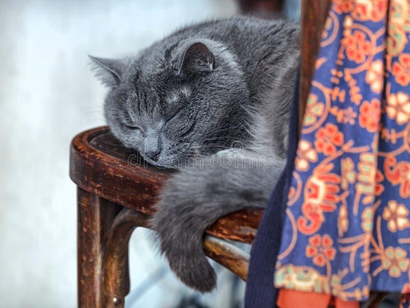 Gato gris el dormir en viejo imagen de archivo libre de regalías