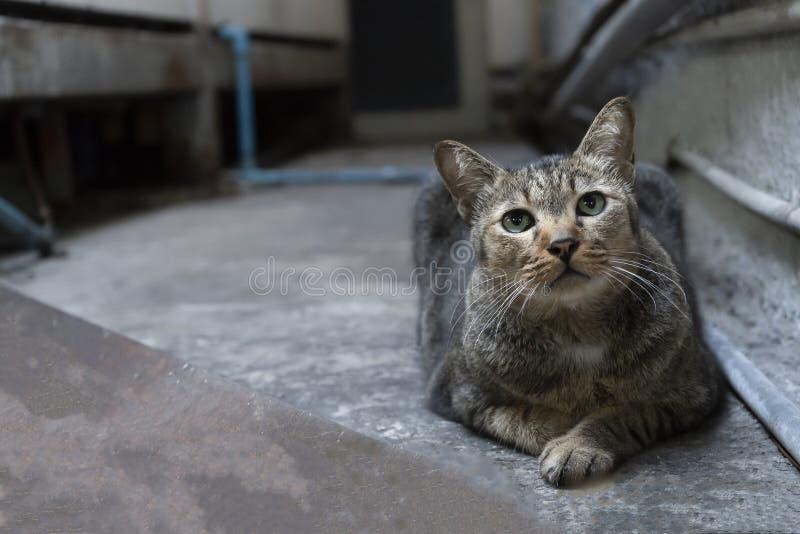 Gato gris en el edificio en luz corta imágenes de archivo libres de regalías
