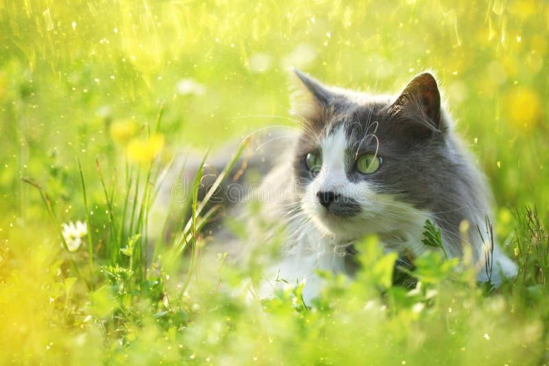 Gato gris en jardín imagen de archivo