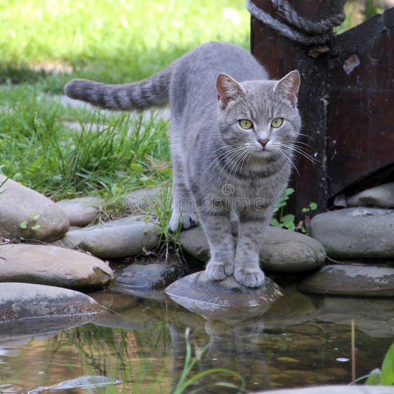 Gato gris en una roca fotografía de archivo libre de regalías