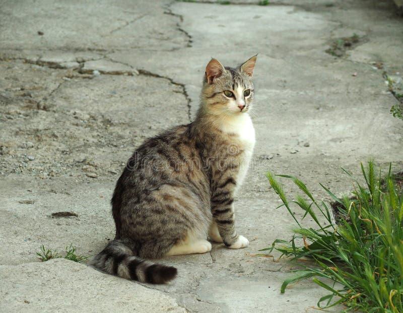 Gato gris que se sienta fuera de hierba cercana fotografía de archivo libre de regalías