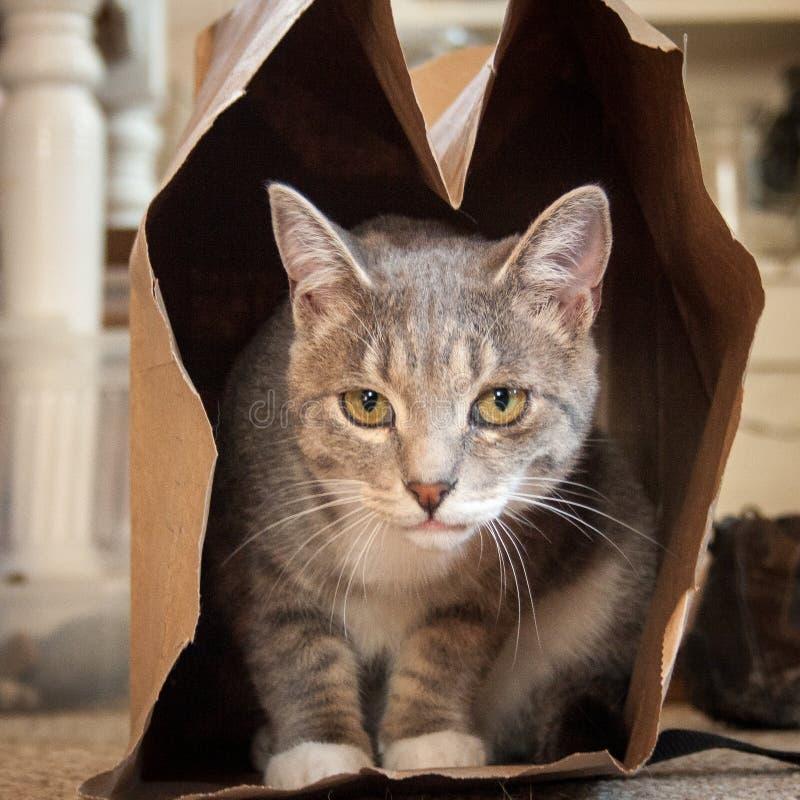 Gato gris y blanco en una bolsa de papel de Brown fotos de archivo