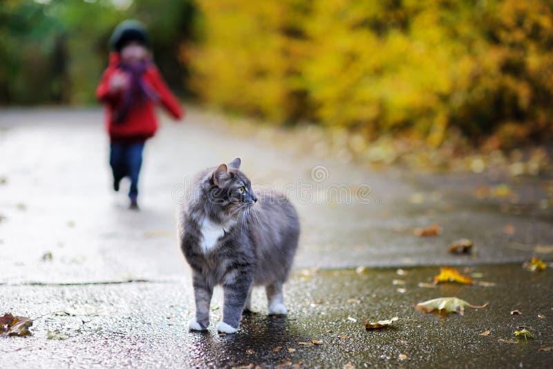 Gato gris y un niño el día del otoño imágenes de archivo libres de regalías