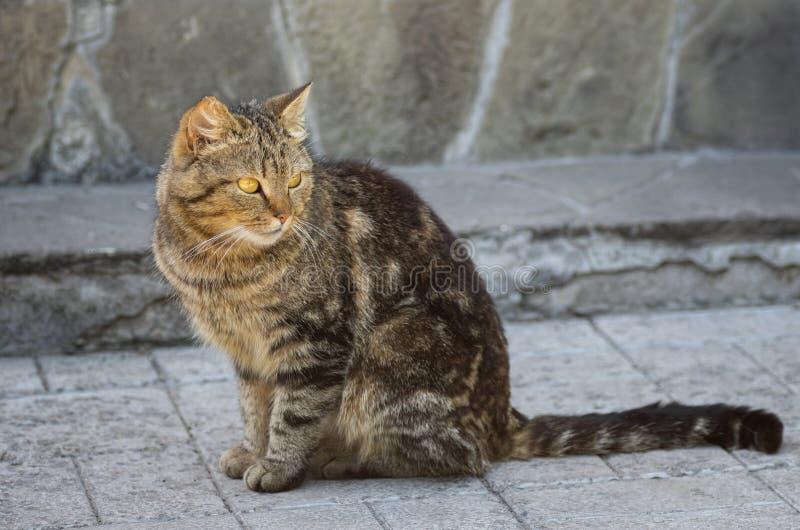 Gato guardado da cidade foto de stock royalty free