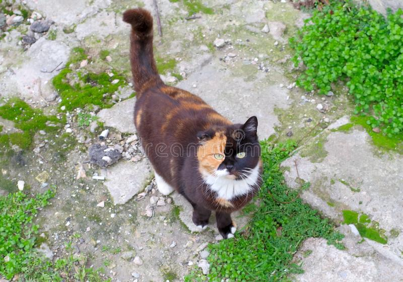 Gato hermoso de la calle foto de archivo
