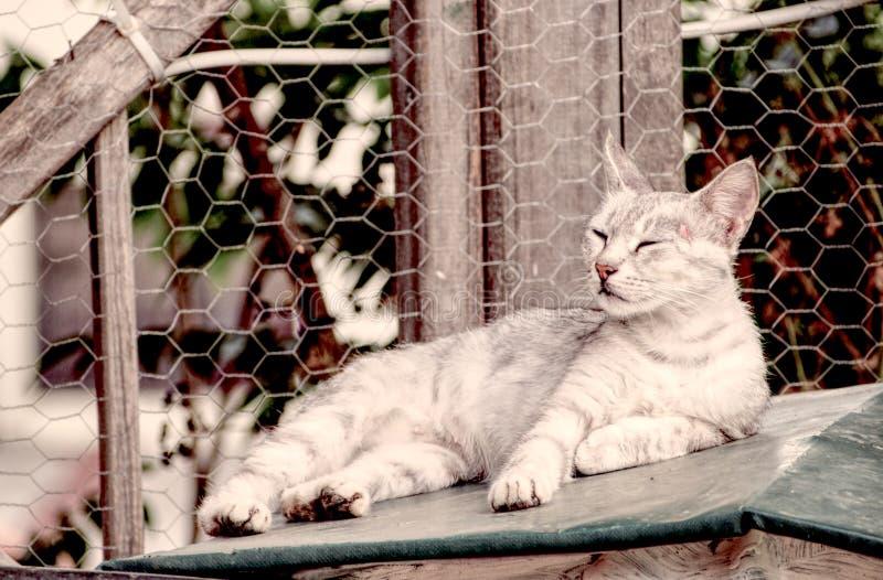 Gato hermoso de la calle fotos de archivo