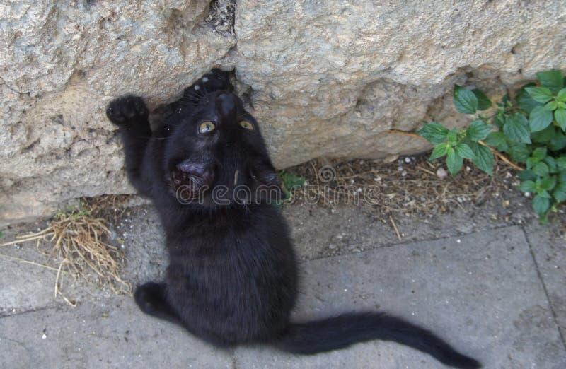 Gato hermoso de la calle imagen de archivo libre de regalías