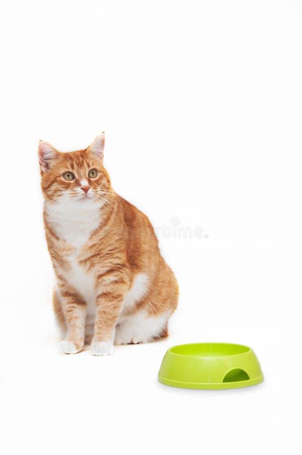 Gato hermoso del jengibre fotografía de archivo