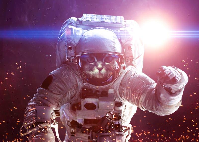 Gato hermoso en espacio exterior Elementos de esto ilustración del vector