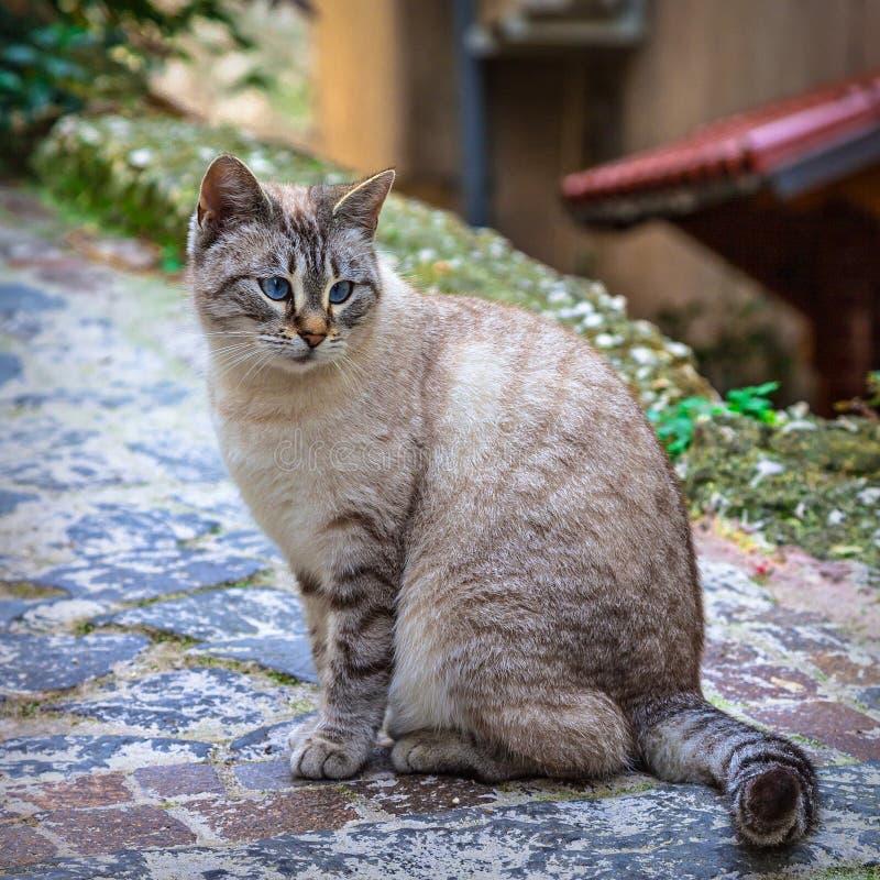 Gato hermoso en la calle foto de archivo libre de regalías
