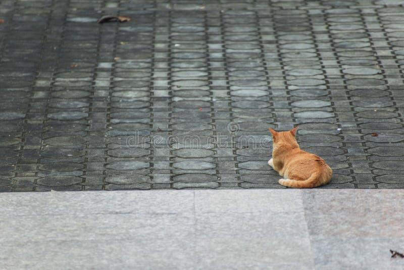 Gato hermoso en la calle imagen de archivo libre de regalías