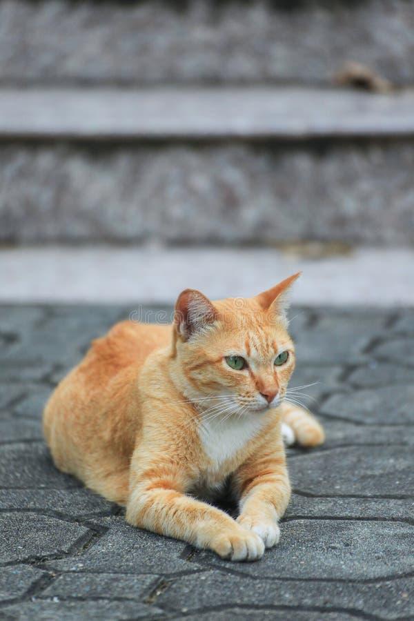 Gato hermoso en la calle fotos de archivo
