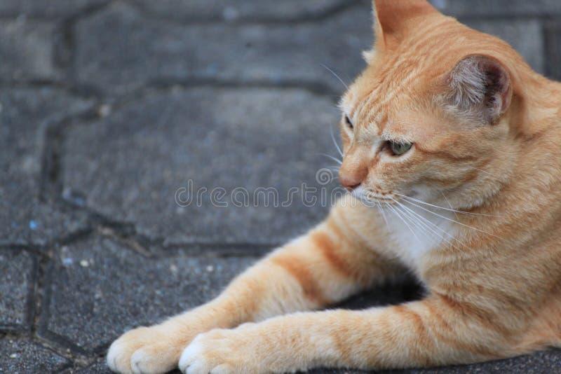 Gato hermoso en la calle fotografía de archivo libre de regalías