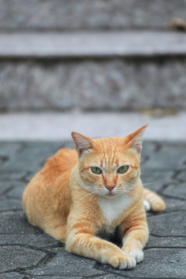 Gato hermoso en la calle foto de archivo