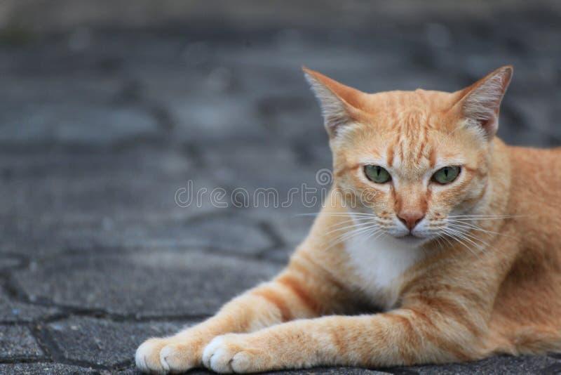 Gato hermoso en la calle imagenes de archivo