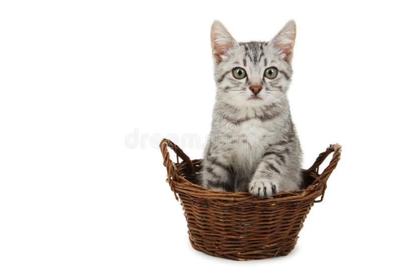 Gato hermoso en la cesta aislada en un blanco foto de archivo libre de regalías