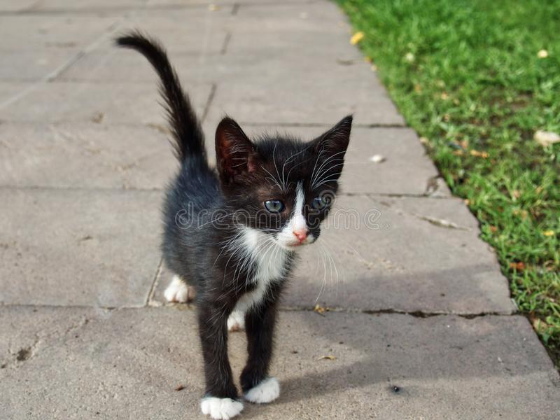Gato hermoso y pequeño de la calle imagen de archivo libre de regalías