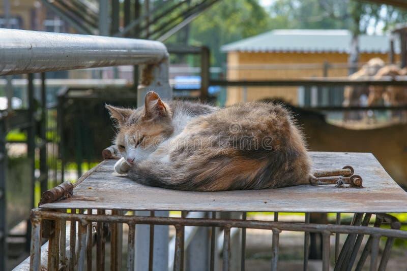 Gato ilegal libre en el zoológico fotografía de archivo libre de regalías