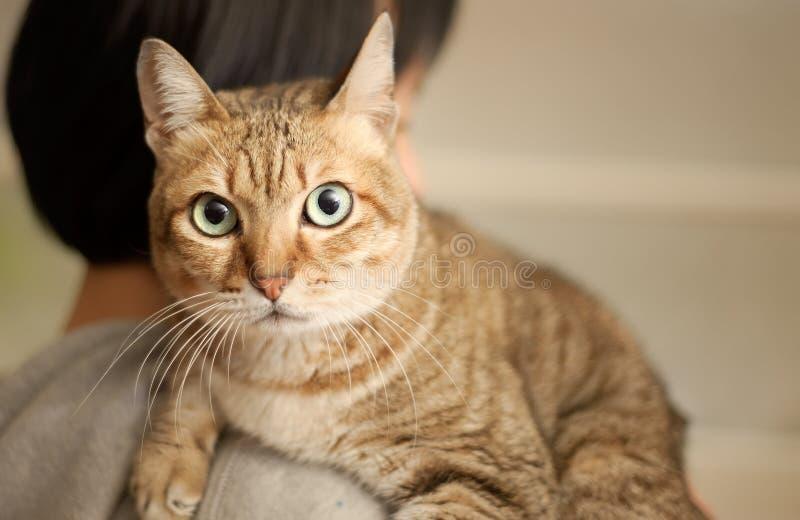 Gato inocente fotografía de archivo