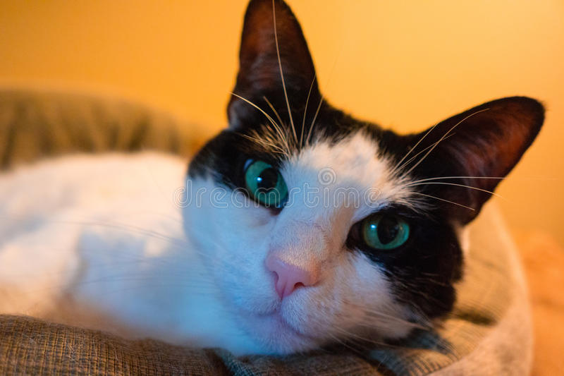 Gato inquisitivo foto de archivo