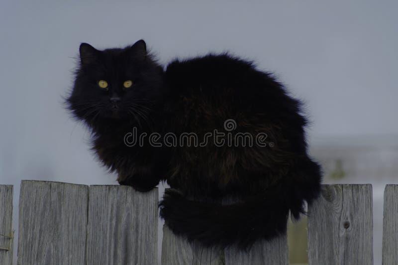 gato Insecto-observado en la cerca foto de archivo